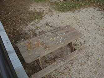Lead Pain Chips and Lead Dust on Picnic Table